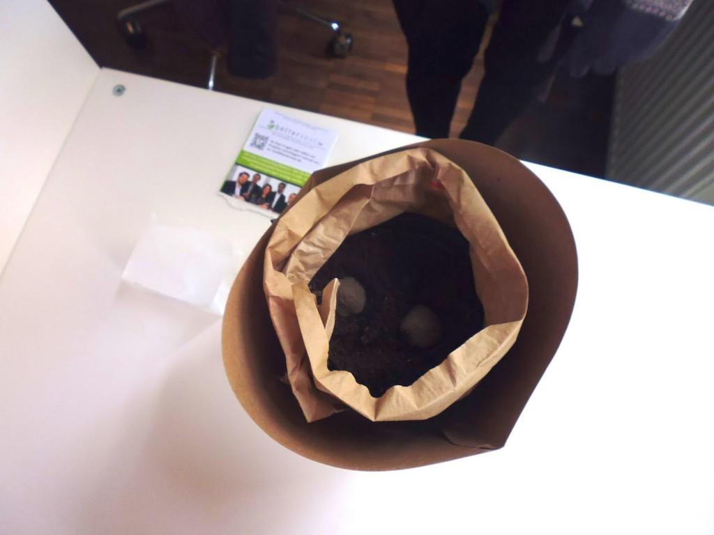 Die eingepflanzten Samenbomben im bettervest Büro