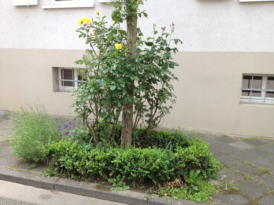 Neumannstrasse-4