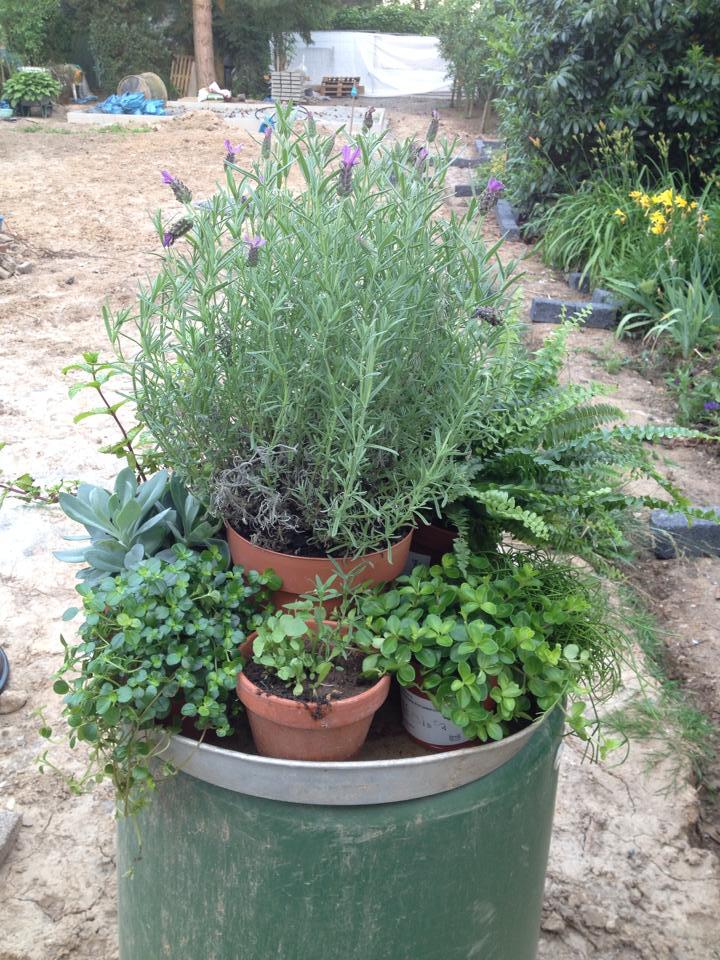Die Samenbomben haben auch in diesem Mini-Garten Platz gefunden