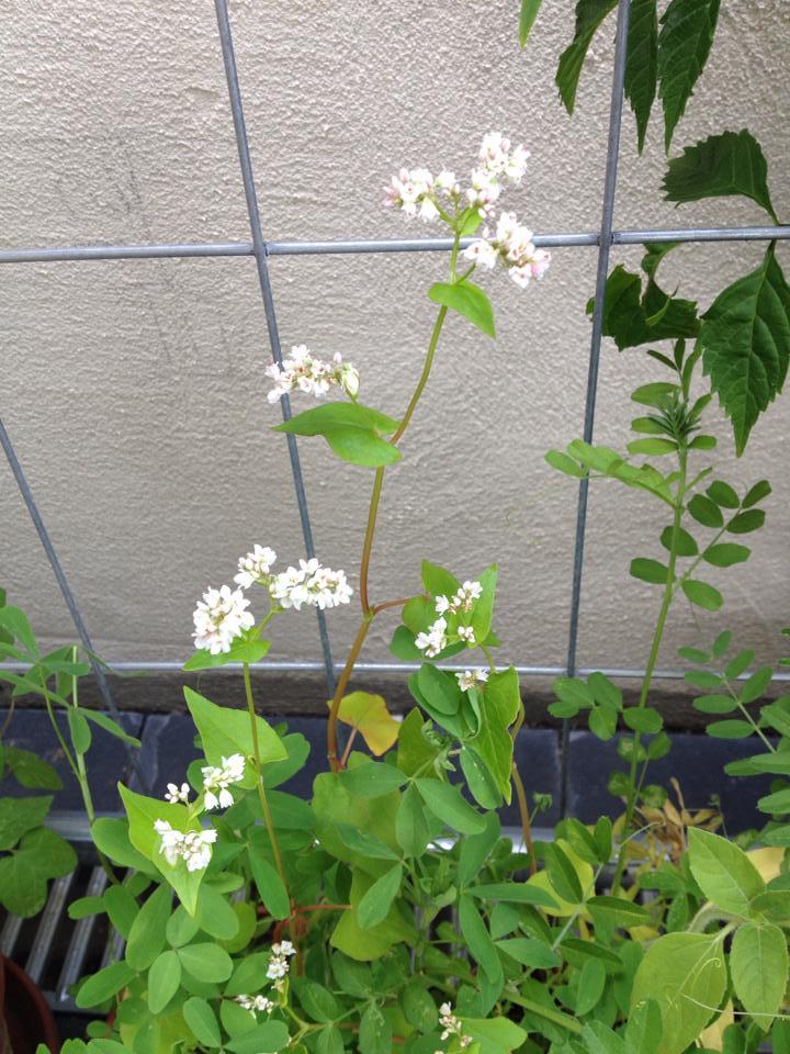 Floras Samen nach 8 Wochen