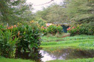 Kenia Blumen Farm Sumpf